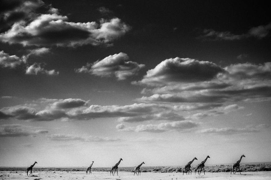 Laurent-Baheux-Caravan-Kenya-2013-900-x-600-72-dpi__880