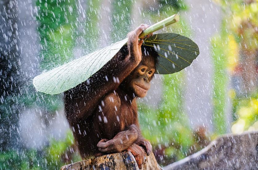iPhotoChannel_sony-world-photography-awards-2015