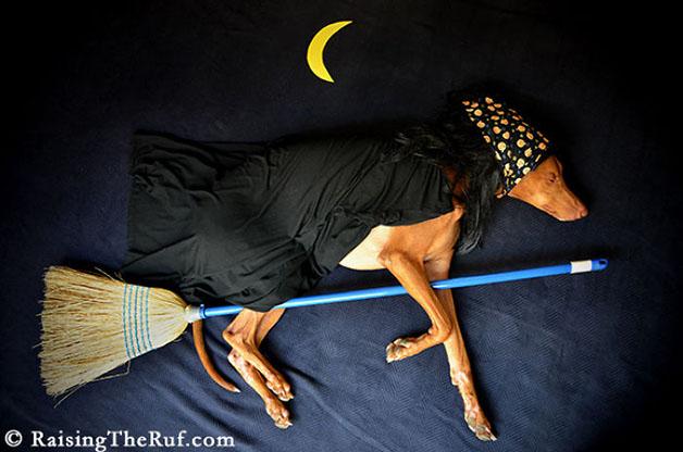 iPhoto-Channel_cachorro_fotografia_aventuras2