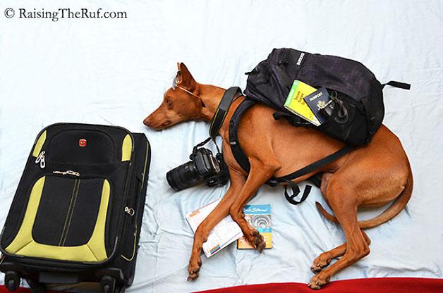 iPhoto-Channel_cachorro_fotografia_aventuras5