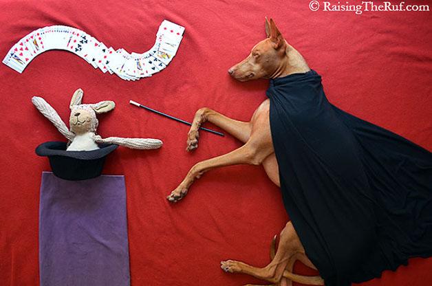 iPhoto-Channel_cachorro_fotografia_aventuras6