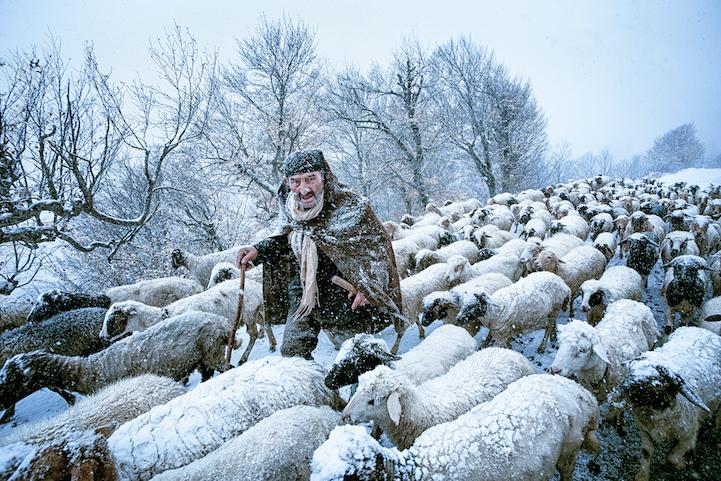 Old Shepherd