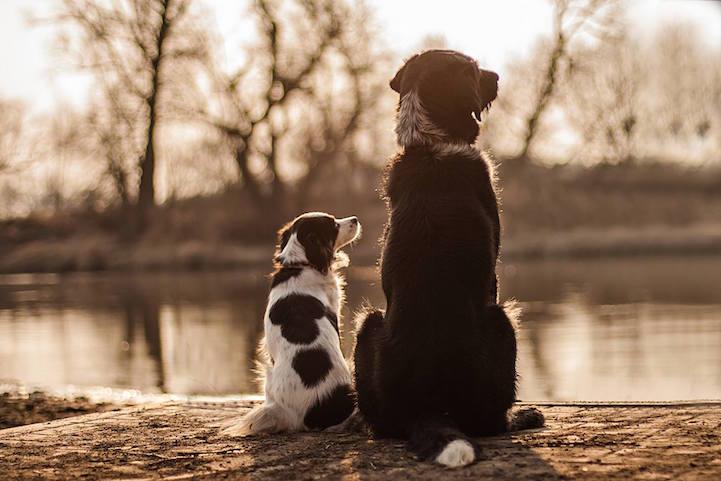 iPhotoChannel_fotografia_cachorro_crianca_agnieszka-gulczynksa-1