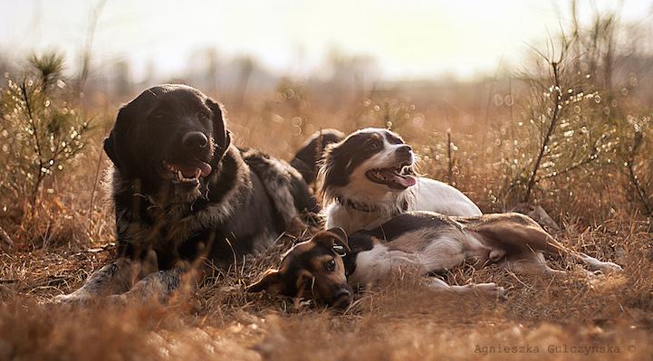 iPhotoChannel_fotografia_cachorro_crianca_agnieszka-gulczynksa-4