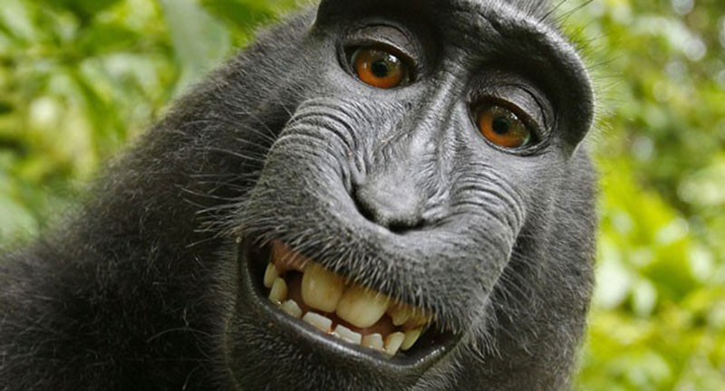 iphotochannel-selfie-do-macaco