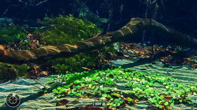 iphotochannel-foto-panoramica-subaquatica-guinness