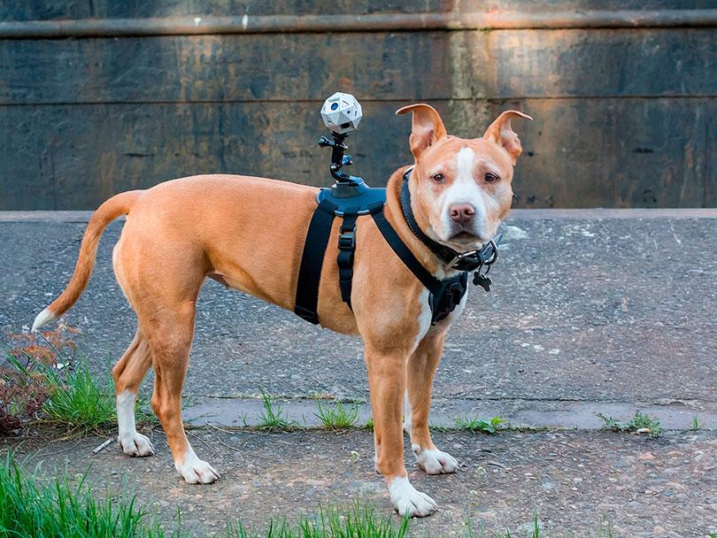 É possível inclusive utilizar a câmera em seu cão com a ajuda de um colete de montagem