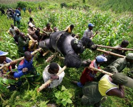 Foto: Brent Stirton/Getty Images Reportage