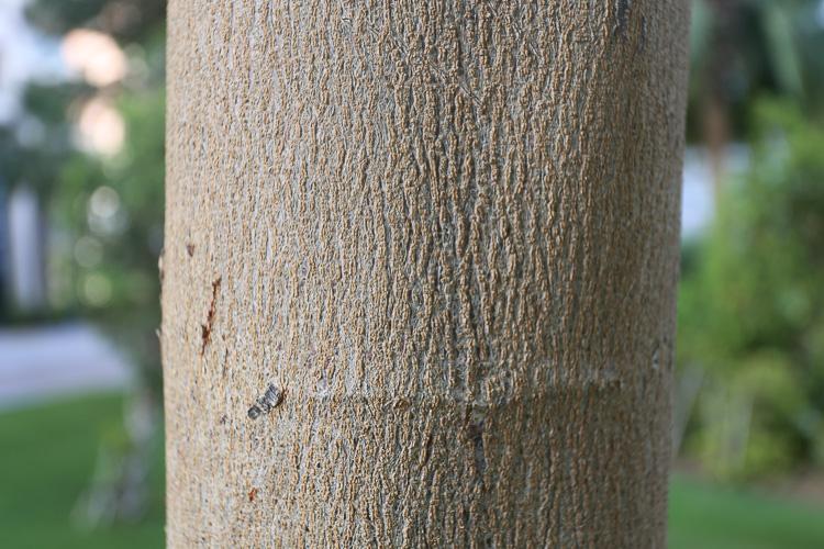 Aqui o fotógrafo chegou mais perto da árvore, com a mesma lente, em 40mm e abertura f/5.6. A aproximação do assunto, assim como na experiência do polegar, deixou o fundo mais desfocado.