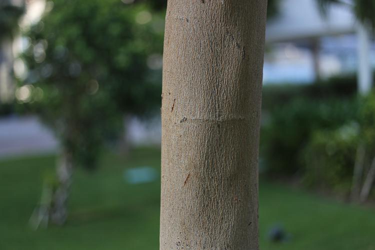 Aqui foi utilizada uma lente 50mm em f/1.8. A abertura grande deu um grande desfoque ao fundo