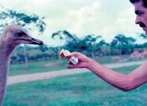 Na Fazenda Nápoles, Escobar mantinha diversos tipos de aves e animais.