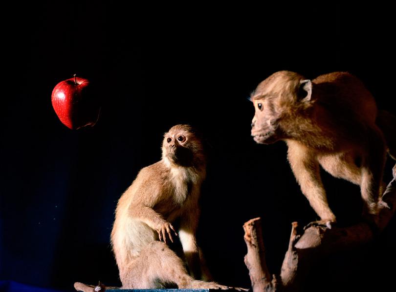 """João Maria Gusmão & Pedro Paiva, """"Macaco de Newton, maçã de Darwin"""", 2011. Arquivo Helga de Alvear"""