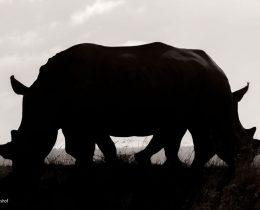 """Confusion"", Rudi Hulshof, Africa do Sul"