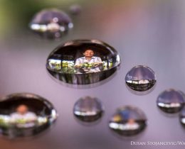 Foto: Dusan Stojancevic