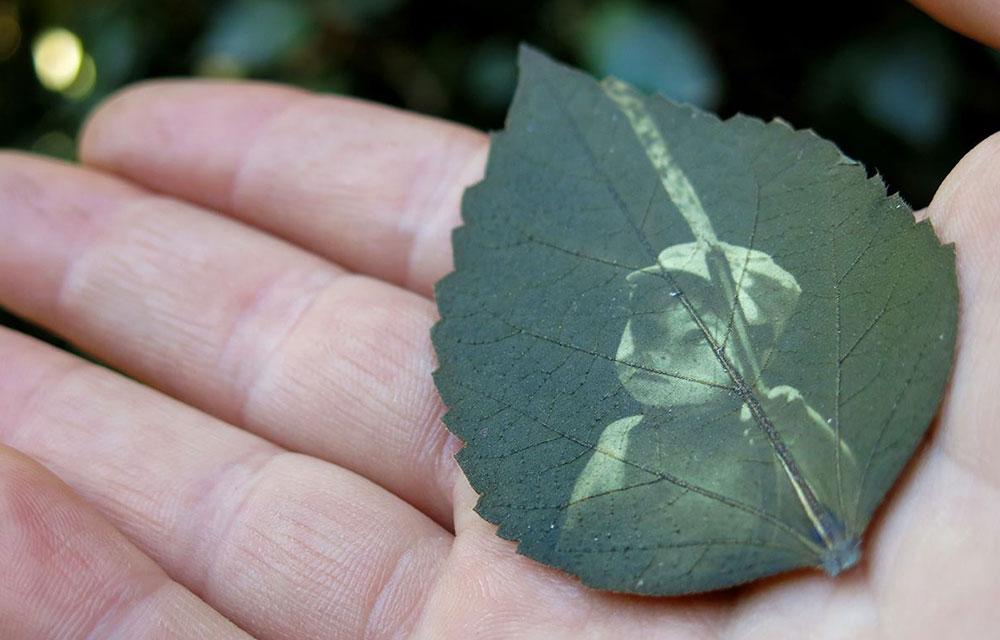 Você Sabia Que Dá Pra Imprimir Fotos Em Folhas De árvores