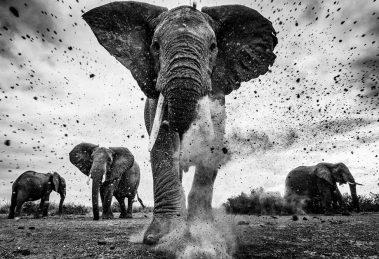 Inscrições abertas para concurso internacional de fotografia em preto e branco